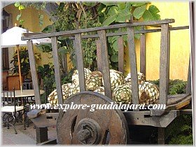 Agave hearts at the Jose Cuervo Distillery in Tequila